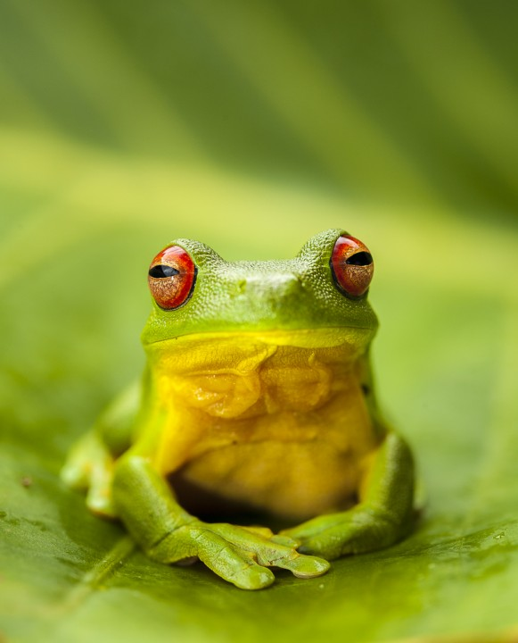 Tree Frog by Darran Leal