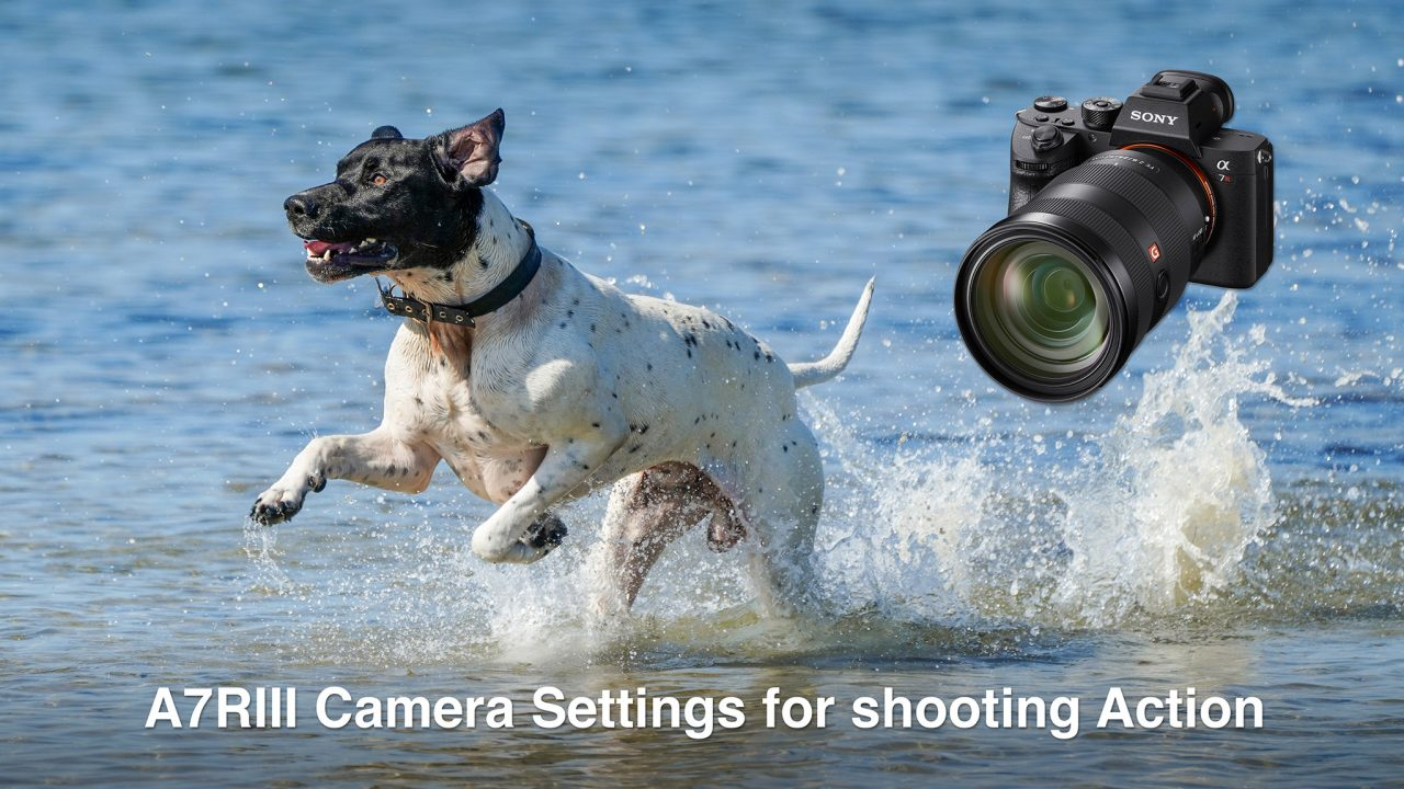 A7RIII Camera Settings for Shooting Action and Wildlife