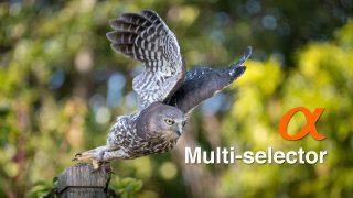 Multi-selector